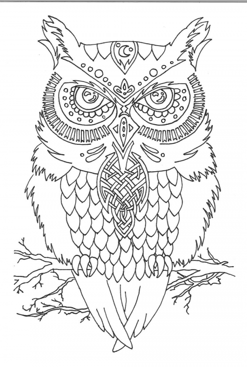 owl tattoo.png