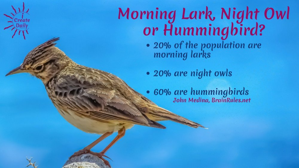 Morning-Lark-stats-Brain-Rules.thumb.jpg.ba2bdef591eddaeaf1412c4f662350ee.jpg