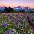 Wildflowerdreams