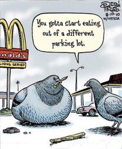 obese pidgeon.jpg