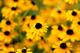 daisies76